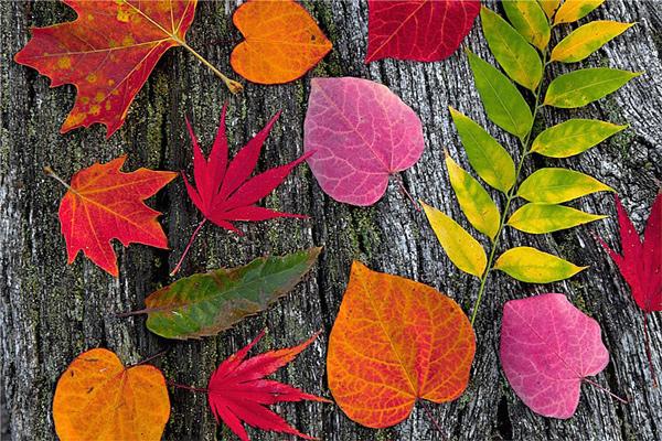 Ağaçlar ve Yapraklar Gergi Tavan Görseli
