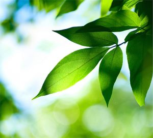 Ağaçlar ve Yapraklar Gergi Tavan Resimleri