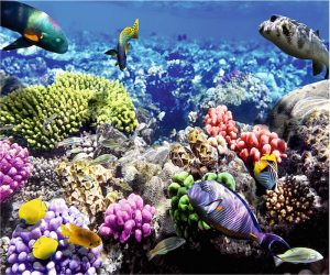 Deniz Canlısı Gergi Tavan Resimleri
