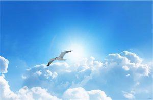 Gökyüzü martı gergi tavan resimleri