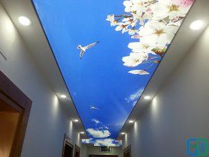 Gökyüzü Güvercin Koridor Gergi Tavan