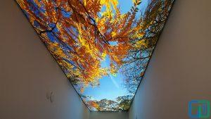 Ağaç Gök Yüzü Koridor Gergi Tavan Modelleri