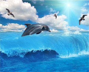 Gergi tavan yunus balığı resimleri