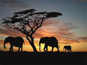 Gergi tavan fil resimleri