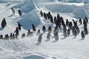 Gergi tavan penguen resimleri
