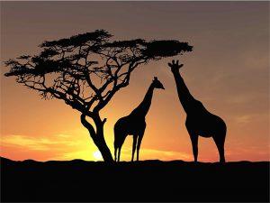 Gergi tavan zürafa resimleri